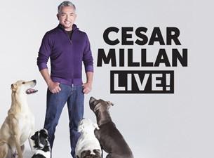 Cesar Millan - a csodálatos kutyadoki előadása